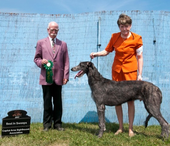Keeper Best in Sweepstakes Capitol Area Sighthound Assoc. 2012